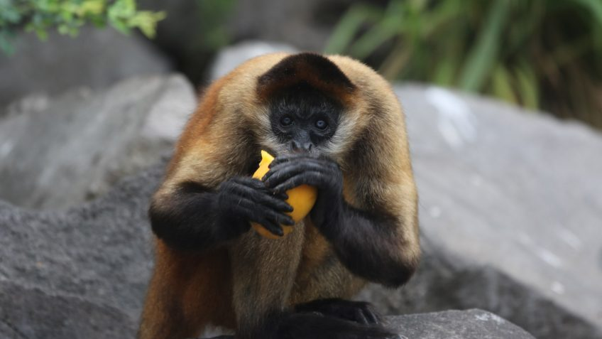 Monkey Nicaragua Tour