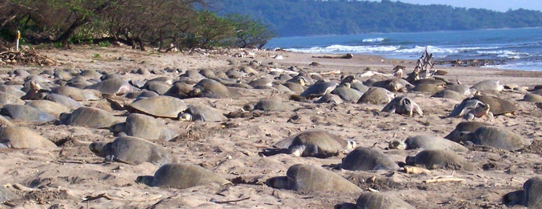 Turtle Nicaragua Tour