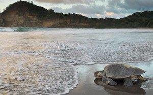 La Flor Natural Reserve, El Coco Beach