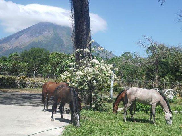 Ometepe Horseback Ridding